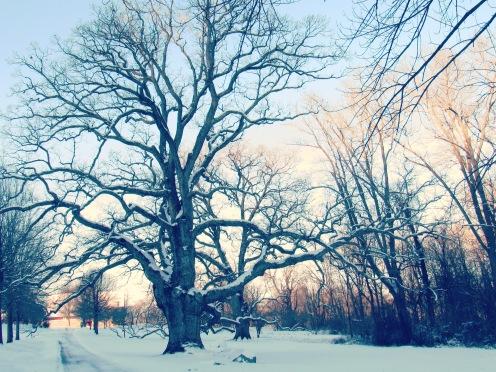 favorite tree 1