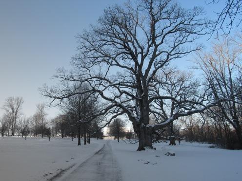 favorite tree 2